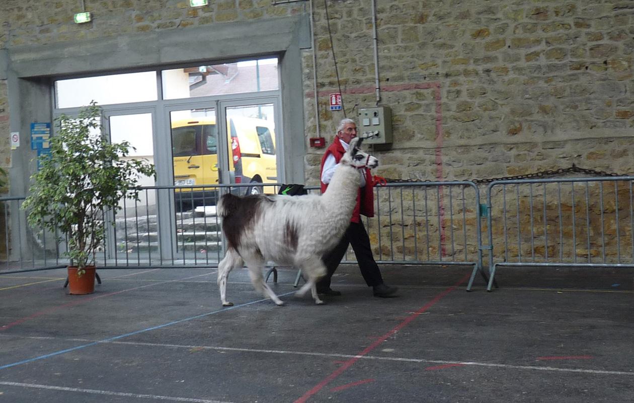 Lamas Auvergne