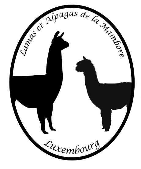 Lamas et Alpagas de la Mambore